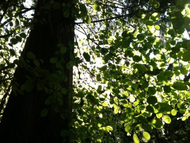 tree (72)